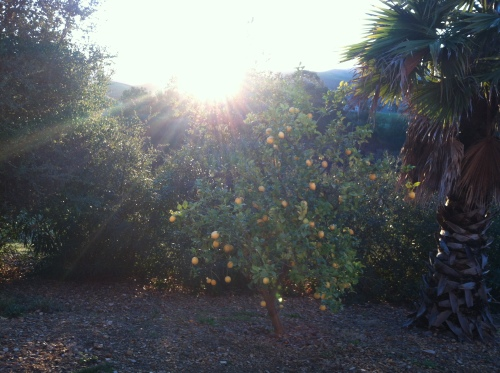 Sunrise over the lemon tree