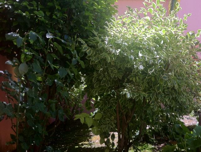 2013-06-22 cool garden corner