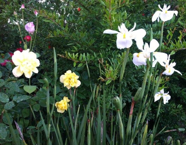 2013-07-16 Happy Garden 2
