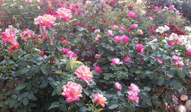 2013-07-Happy Garden 1